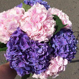 7 розовых и фиолетовых гортензий