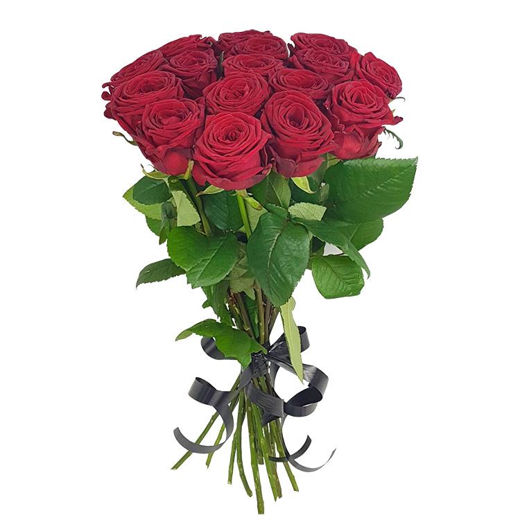 15 красных роз (на белом фоне)