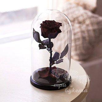 Бордовая роза в колбе 26 см