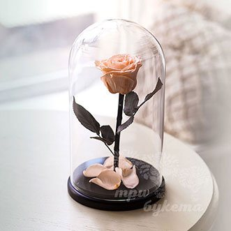 Персиковая роза в колбе 26 см