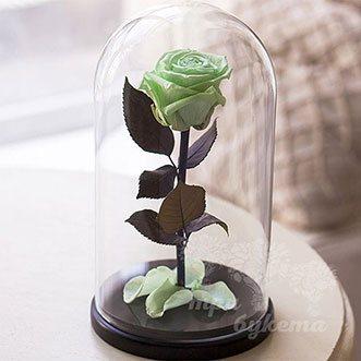 Светло-зеленая роза в колбе 26 см