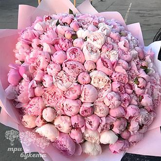 151 розовый пион