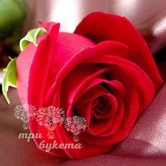 Гигантские розы поштучно