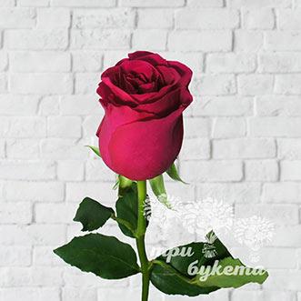 Кенийская роза поштучно фото