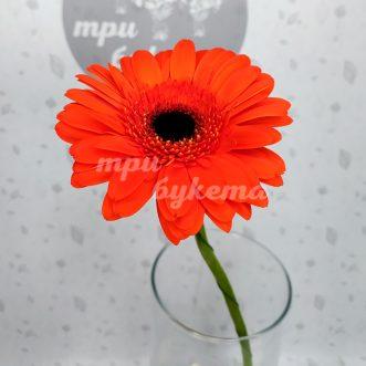 Оранжевая гербера Вижн