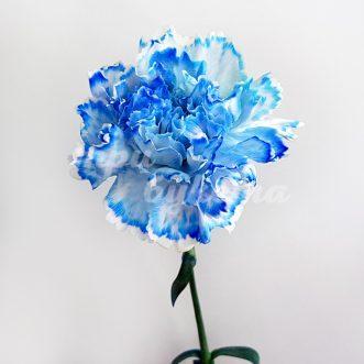 Синяя гвоздика Монро