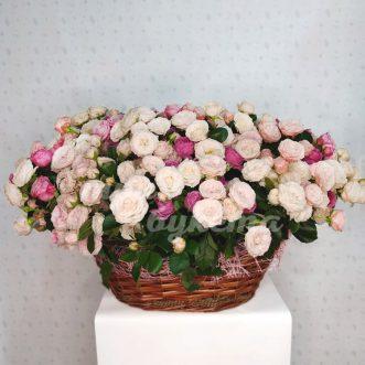 Корзина из 109 пионовидных роз